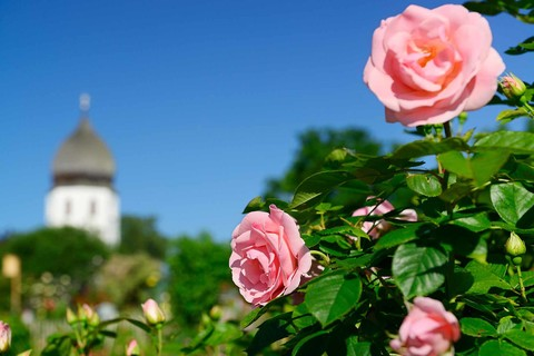 xx-fraueninsel-rose-campanile-(c)andreas-strauss.jpg