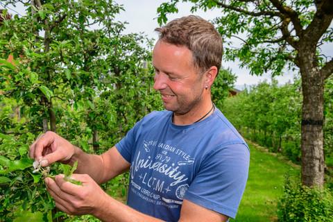 Herr Christian Seebacher bei Arbeiten im Apfelgarten