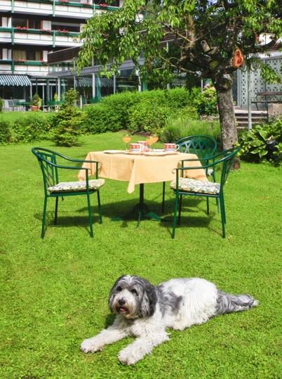 hundehotel-chiemsee-alpenland-852x1144.jpg