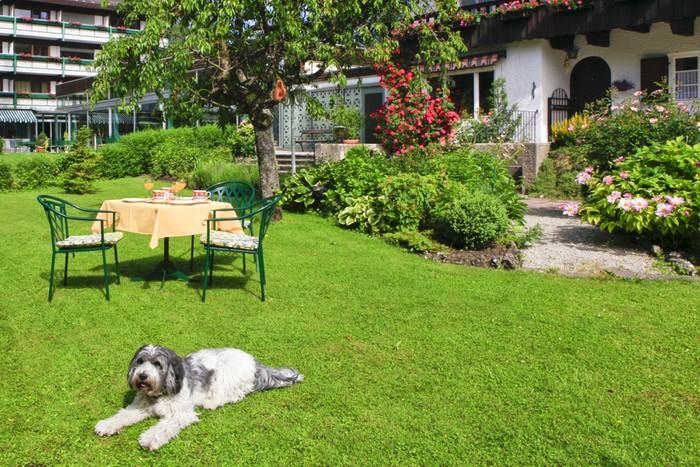 hundehotel-chiemsee-alpenland.jpg