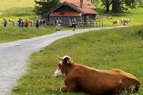 ratsch-bei-der-sennerin-kuh(c)HeimatEntdeckerTouren.jpg