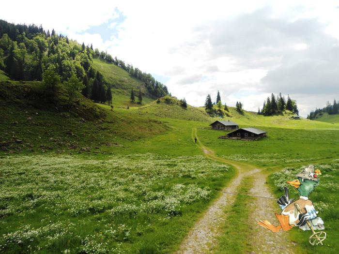 anterl-auf-der-alm-(c)chiemsee-alpenland-tourismus-huber-wast.jpg