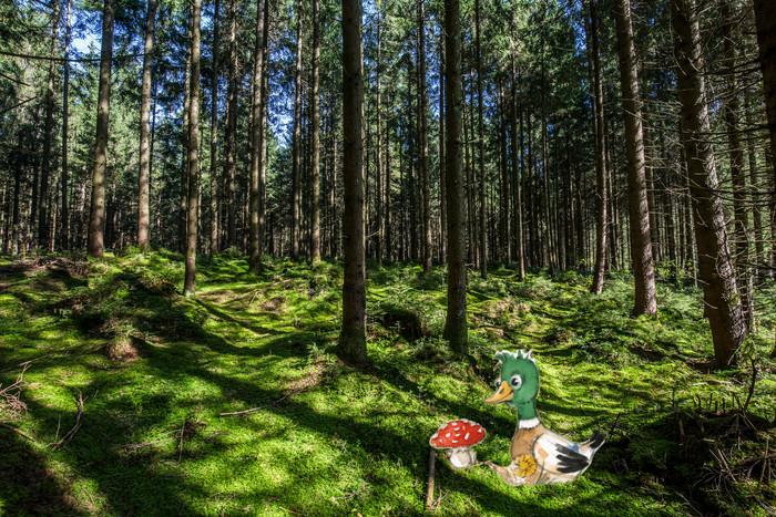 anterl-im-wald-(c)chiemsee-alpenland-tourismus-huber-wast.jpg