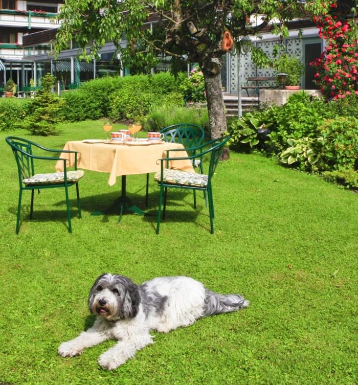 hundehotel-chiemsee-alpenland-1007x1083.jpg