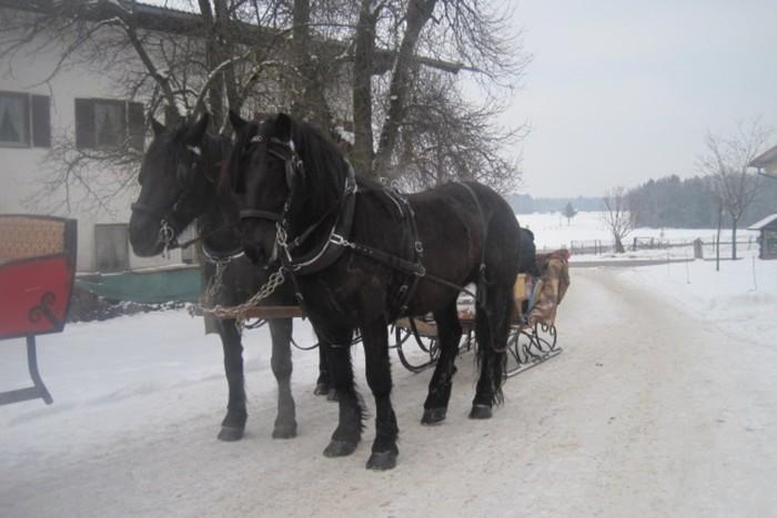 seppenbauer-pferde-kutsche-winter.jpg