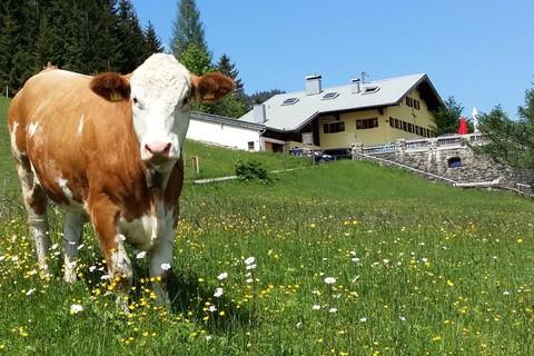 jugendherberge-bayrischzell-sudelfeld-kuh.jpg