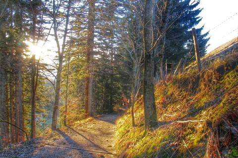 wald-herbst-chiemsee-alpenland.jpg