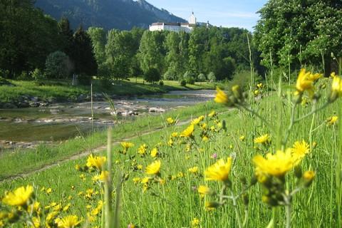 knickenberg-petra-wadlkraft-hirnschmoiz-naturcoaching-fluss-blumen.jpg