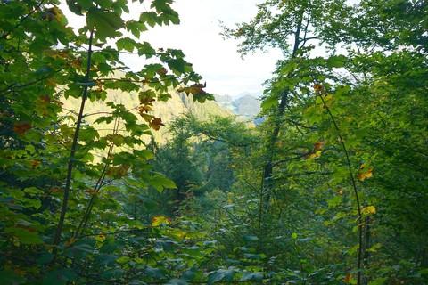 wald-chiemsee-alpenland.jpg