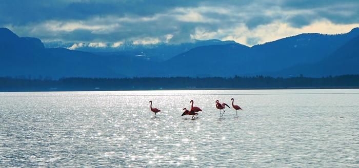flamingos-am-chiemsee-(c)chiemsee-alpenland-tourismus.jpg