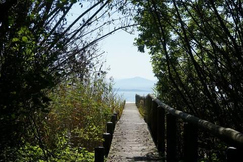 Chiemsee-Ufer-Steg.jpg