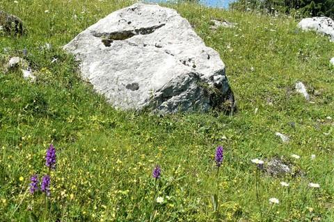 Bergblumen-Dalsen.jpg