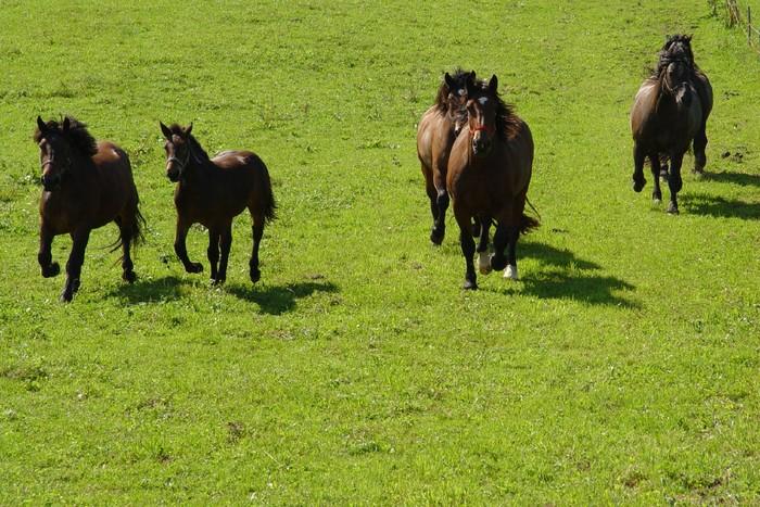 seppenbauer-weide-pferde.jpg